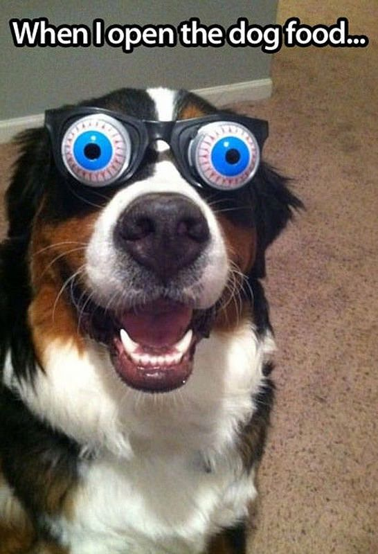 Pictures Funny Dogs Glasses Funnies Funny Animal Big Eye