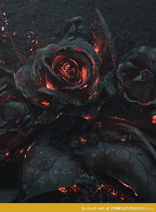 acfbebff4 Beauty in flames Viral Videos, Burning Rose, Hades Symbol, Dead Rose Tattoo,