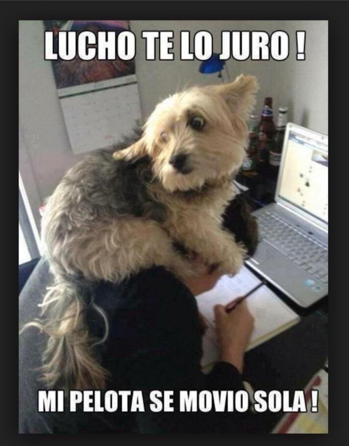 Muero De Risa Con Los Memes De Lucho Pobre Perro Fotos De Animales Humor Divertido Sobre Animales