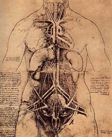 Leonardo da Vinci 1509. Ylävartalo vanhana kuolleen miehen ja alaosa naisen, kohtu on kuviteltu, Aristoteleen kuvauksen mukaan. Kohdun kiinnikkeet ovat tiineen lehmän anatomiaa.
