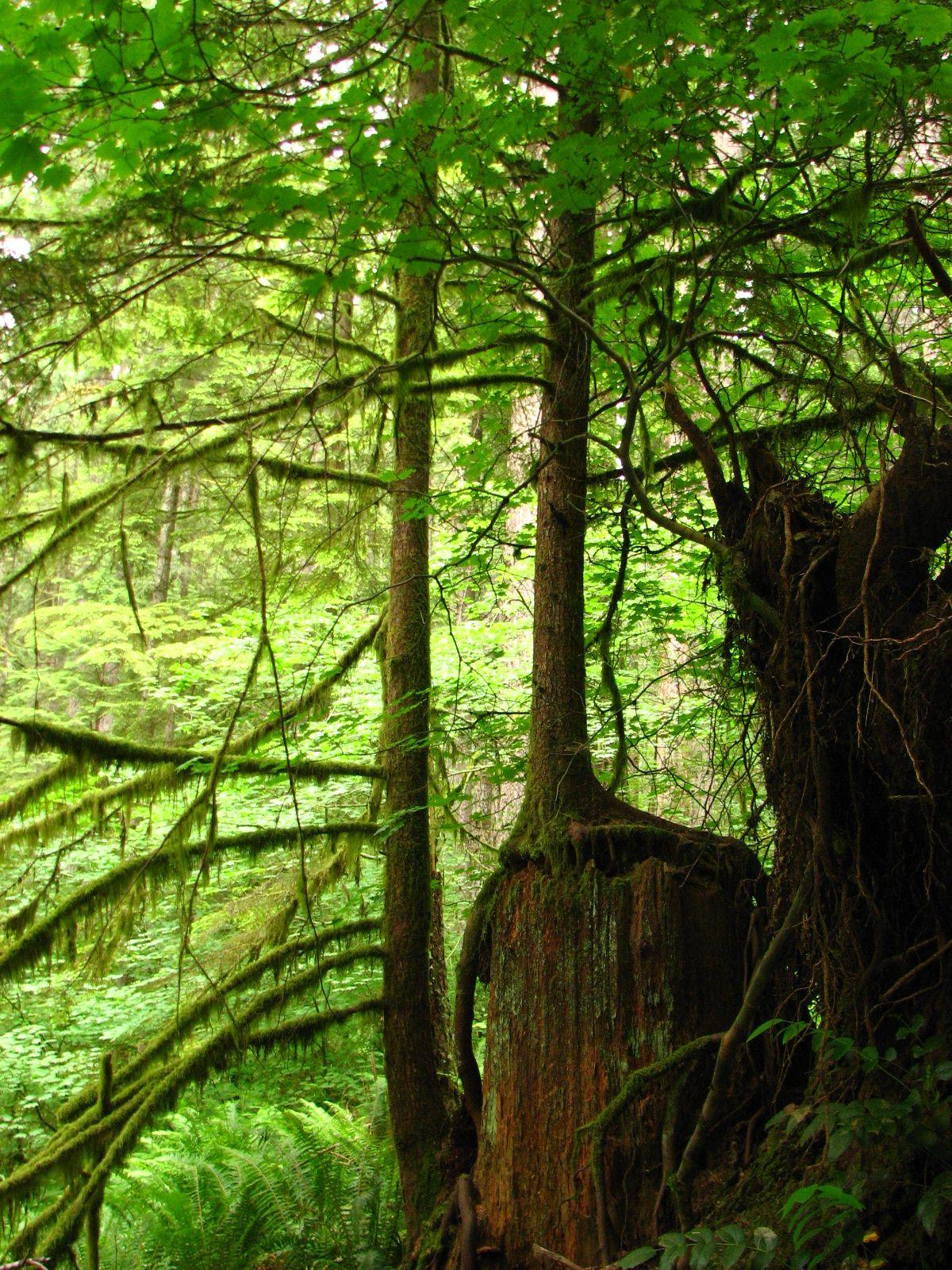 A Hike In The Woods Corvallis Oregon Corvallis Oregon Oregon Life