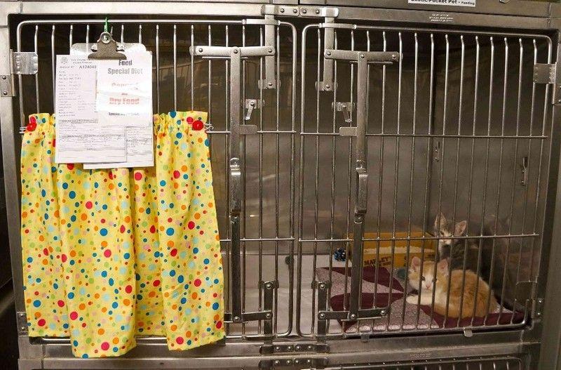 13+ Animal shelter billings mt images