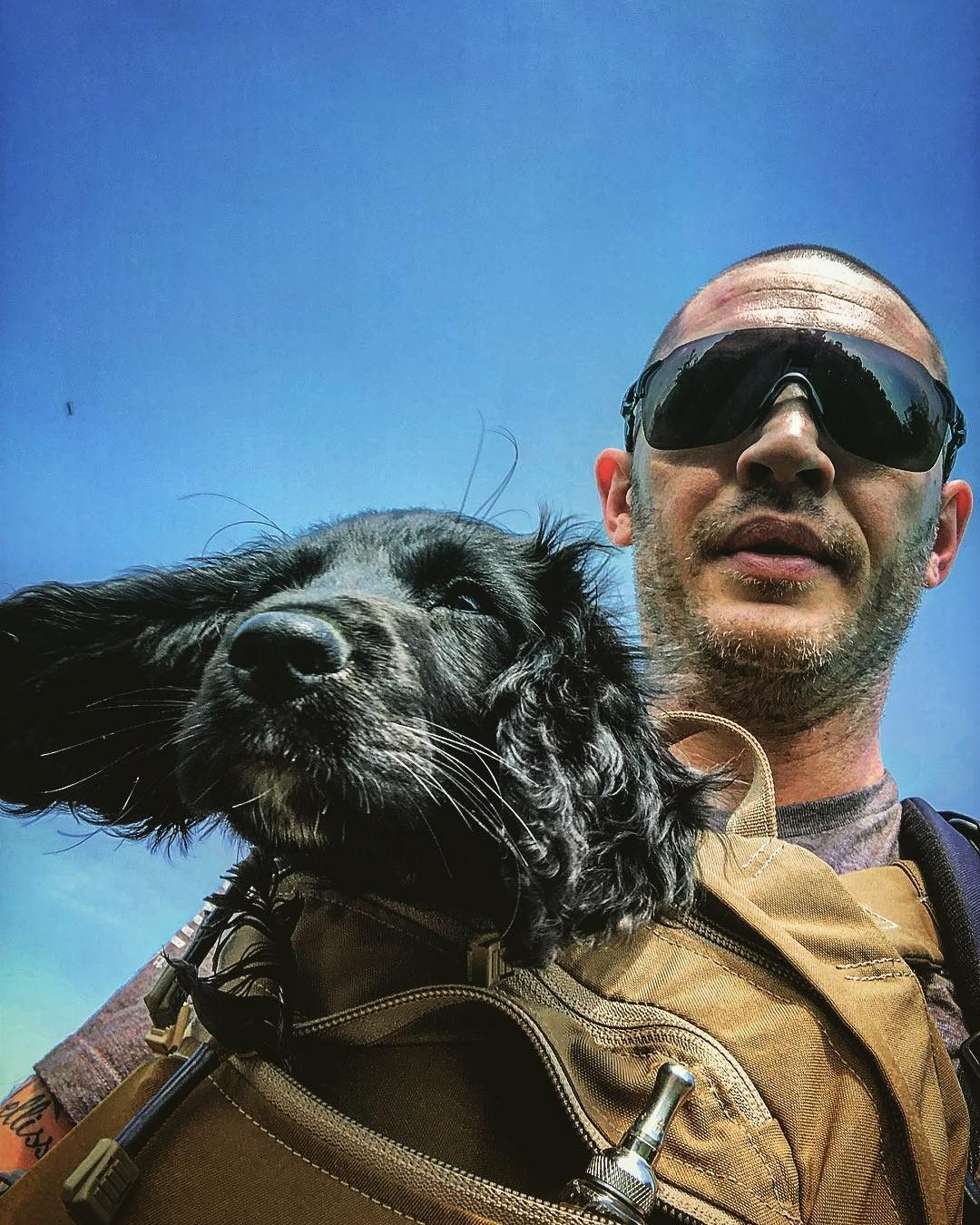 e5f4f3c61 Pin by Natasha W on 2018 | Tom hardy variations, Tom hardy dog, Tom ...