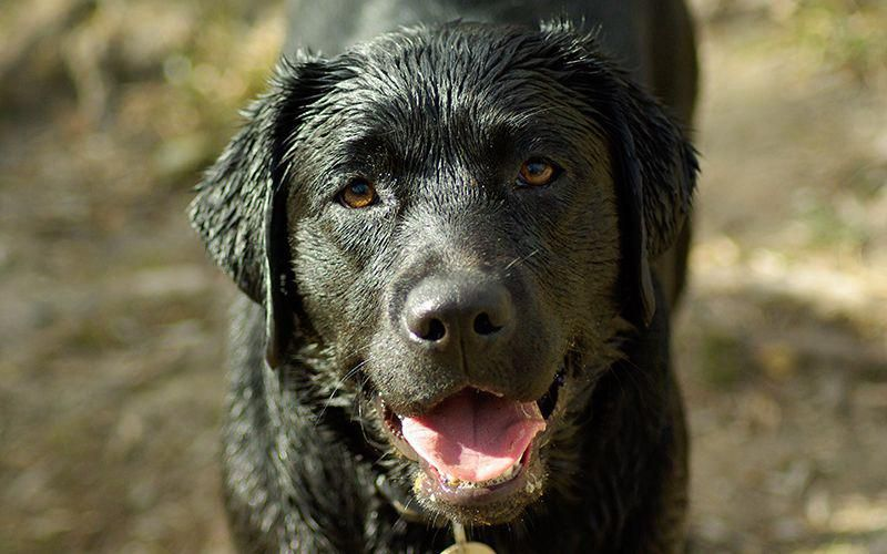 Welcome To Our Complete Guide To Dogs And Shampoo Helping You To