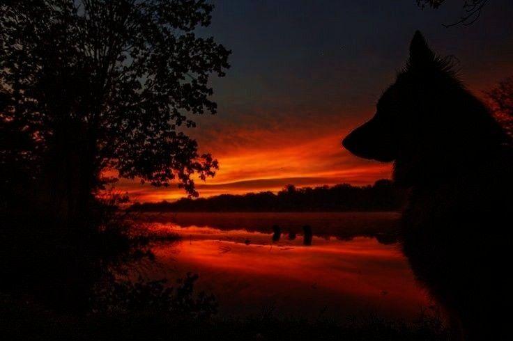 500px   - sunsets and sunrises -Deutscher Schäferhund Sunrise von Kristin Castenschiold auf 500px