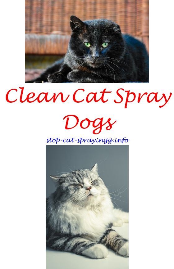 Spray Against Cats Cat Pee Out Of Mattress Pet Urine   Cat Spraying How To Get  Rid.cat Peeing On Carpet Cat Still Spraying After Being Neutered Cat Pee  Odor ...