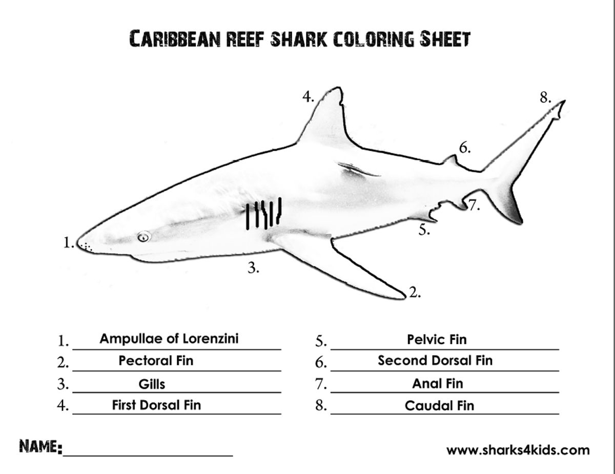 A coloring sheet that will help kids learn the parts of a shark ...