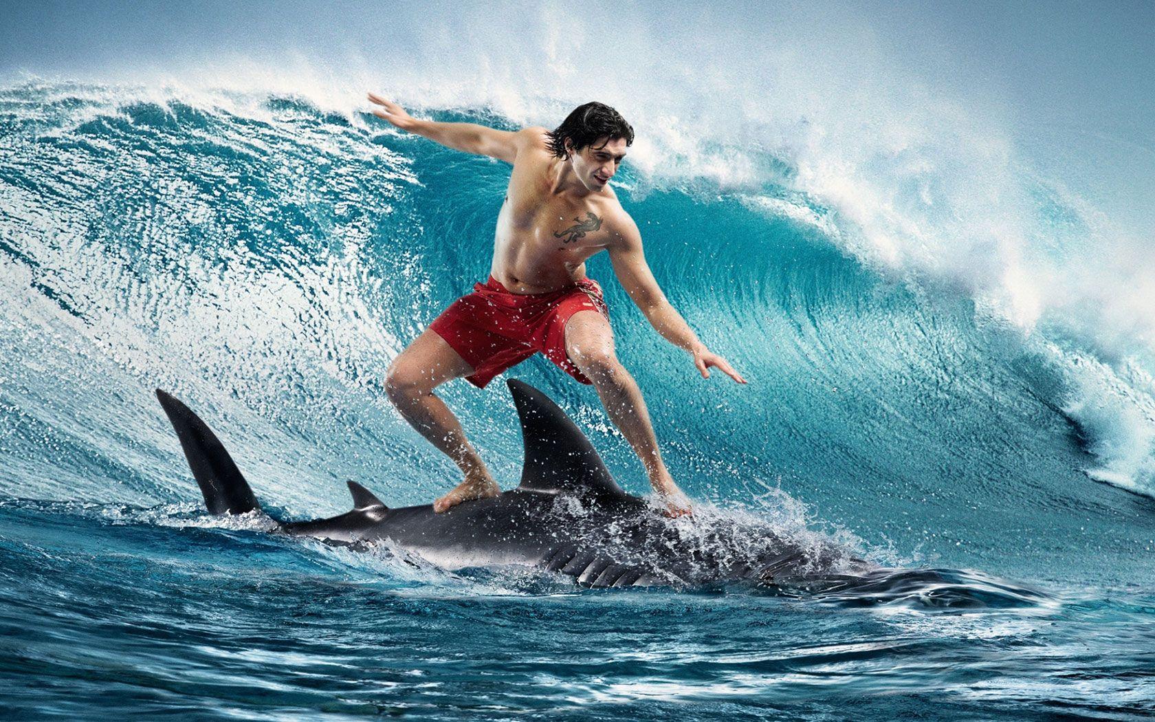 Shark Surfing HD Background Wallpaper