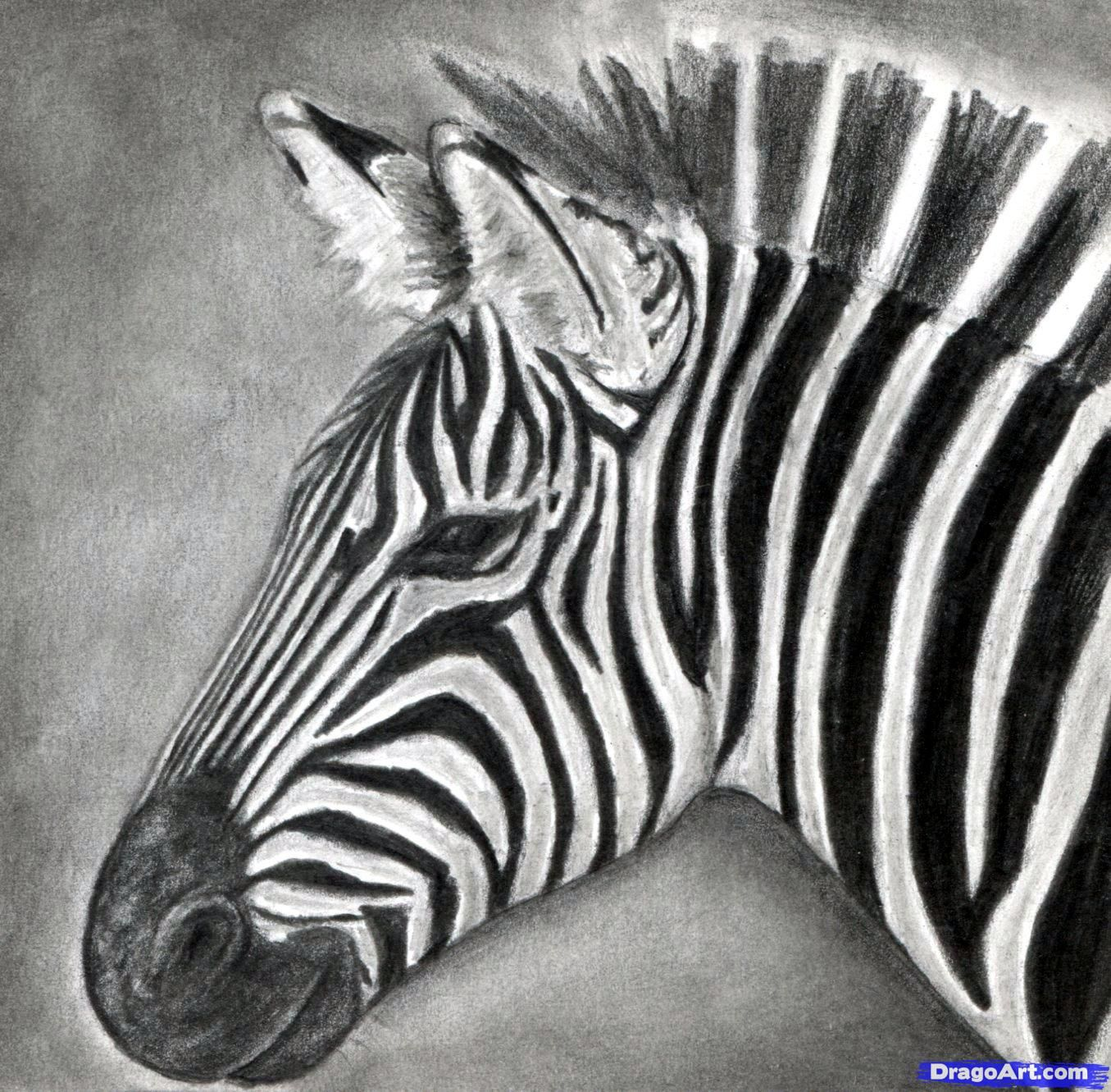 step by step drawing zebras how to draw a zebra draw a realistic zebra
