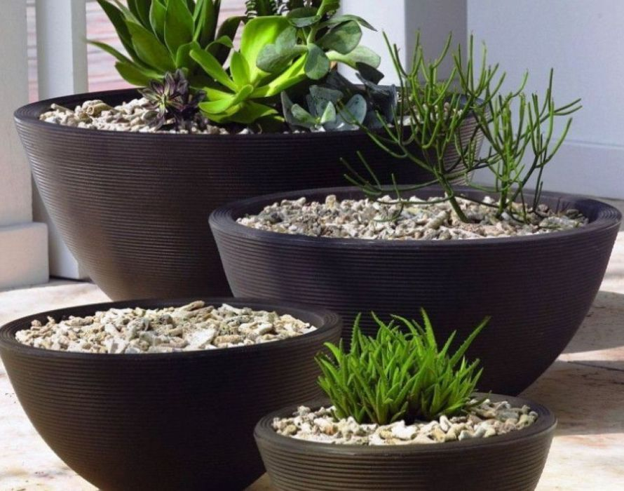 Plant Round Planter Ideas Inexpensive Large Planter Ideas Modern Design Of Screws Black Vase For Cactus Plant In The Outdoor Planters Outside Planters Planters