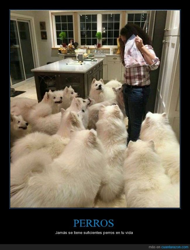 Me ha parecido contar 10 perretes - Jamás se tiene suficientes perros en tu vida   Gracias a http://www.cuantarazon.com/   Si quieres leer la noticia completa visita: http://www.estoy-aburrido.com/me-ha-parecido-contar-10-perretes-jamas-se-tiene-suficientes-perros-en-tu-vida/