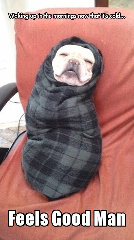 0ffb2939792d9a26295d0998921b954e never let me, blanket blanket, animal and dog