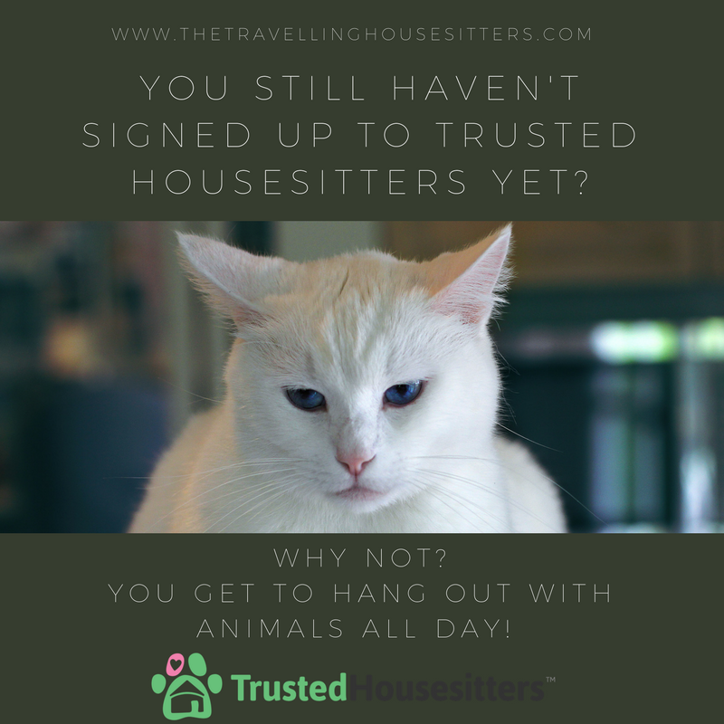 Set Up A Profile On Trusted House Sitters And Start Your House Sitting Journey Today How To Be A Pet Sitter Ho Pet Sitting Business Pet Sitters House Sitting