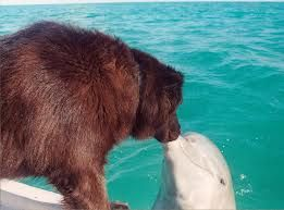 #dolphins love dogs