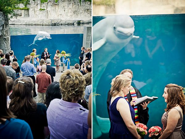 Mystic Aquarium Wedding Ceremony Photos By New England Based Destination Photographers JAGStudios