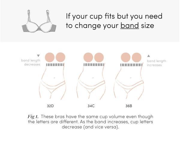 6dc8077ef Bra sizes aren t like clothing sizes (where a 12 is larger than an  8)—they re more like ratios—and sister sizing is the bra secret you should  know about.