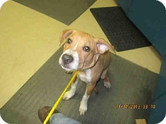 Melbourne Fl Labrador Retriever Mix Meet Fireball A Dog For Adoption Kitten Adoption Labrador Retriever Mix Pets