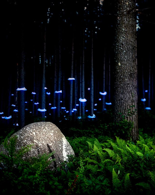 Landscape Light Sculptures