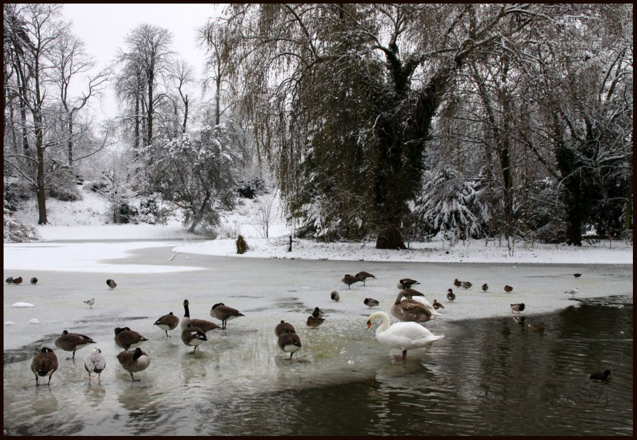 Bois De Vincennes At Winter World Paris Outdoor