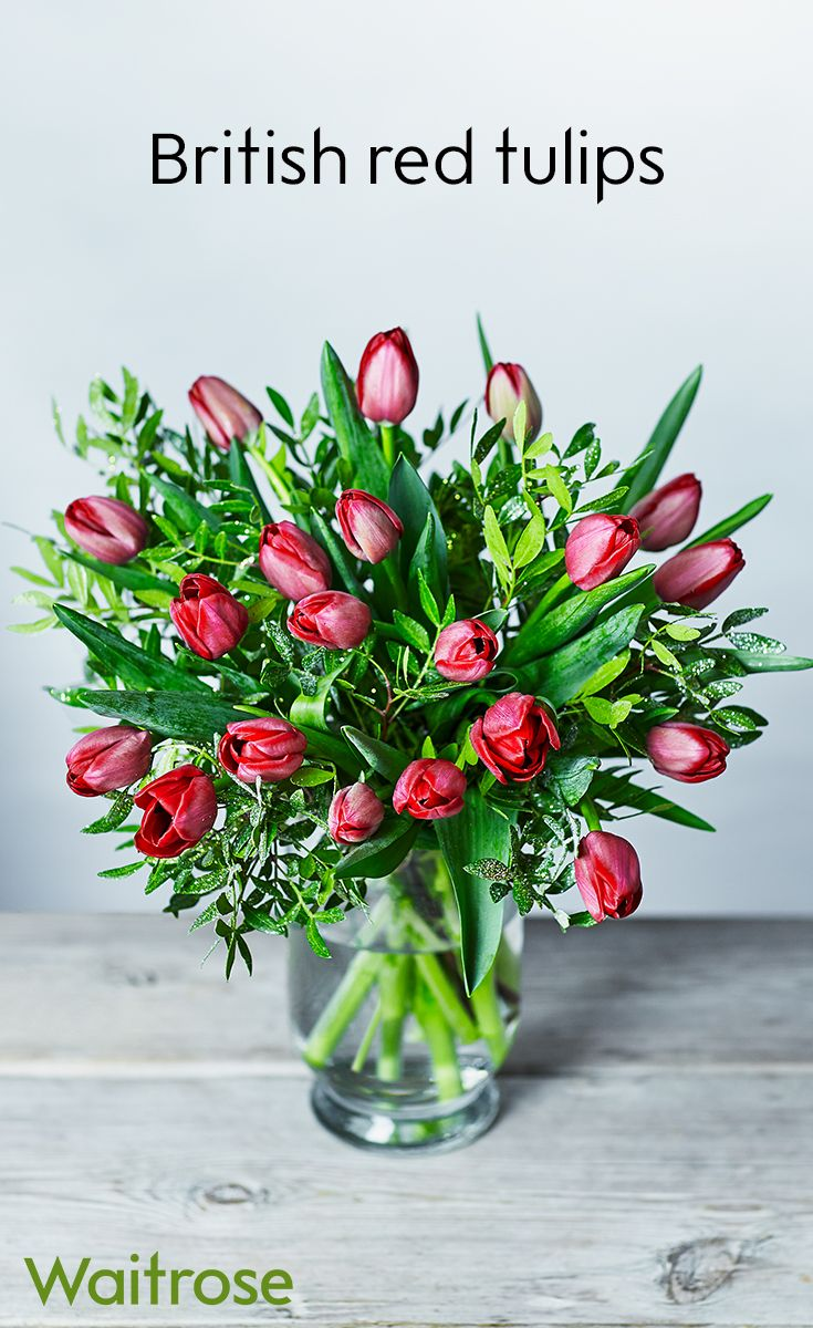 Grown just for christmas our british red tulips are great value and grown just for christmas our british red tulips are great value and simply beautiful they come wrapped and tied with a festive ribbon perfect fo izmirmasajfo