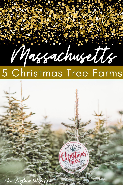 5 Best Christmas Tree Farms In Massachusetts In 2020 Christmas Tree Farm Tree Farms Cool Christmas Trees