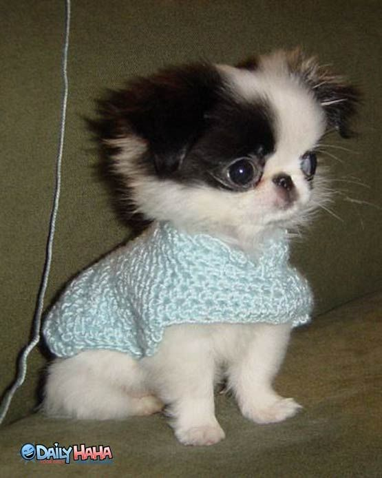 Puppy Sweater Anyone With Images Cute Animals Cute Dog