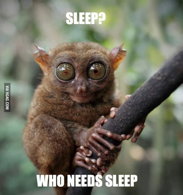 Who Needs It Sleep Quotes Funny Sleep Funny Sleep Deprivation Humor
