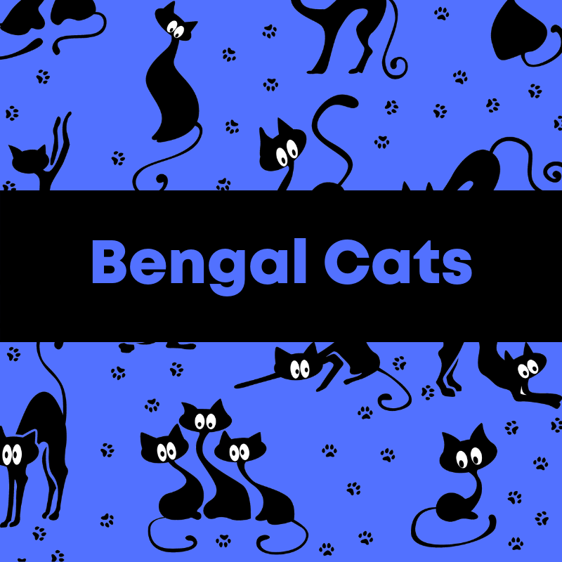 Pin By All To Do With Cats On Bengal Cats Cat Care Cat Care