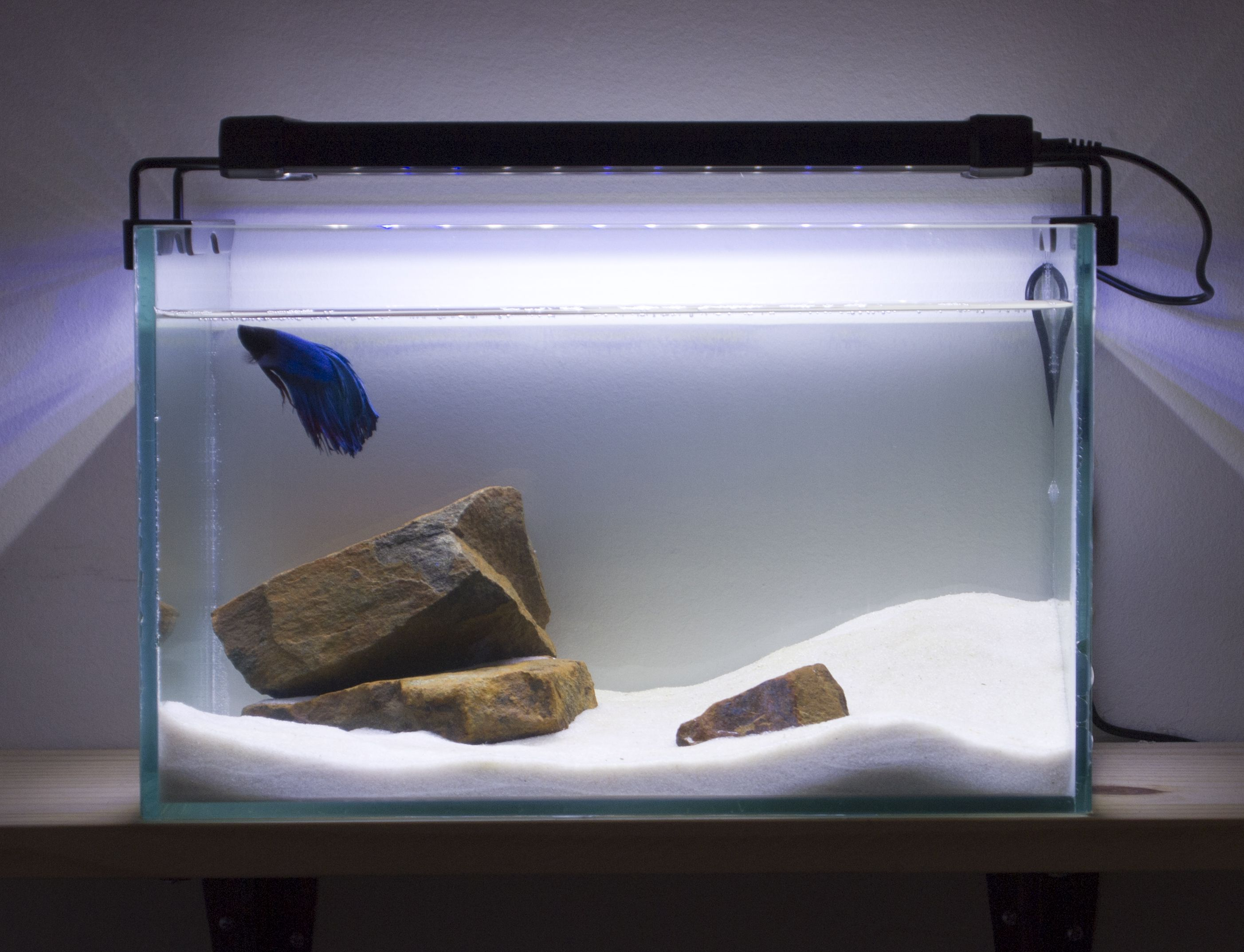 hardscape aquarium Google Search Fish Tank