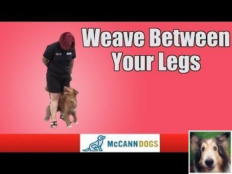 A How To Guide On Dog Obedience Training With Schedule 8896868565
