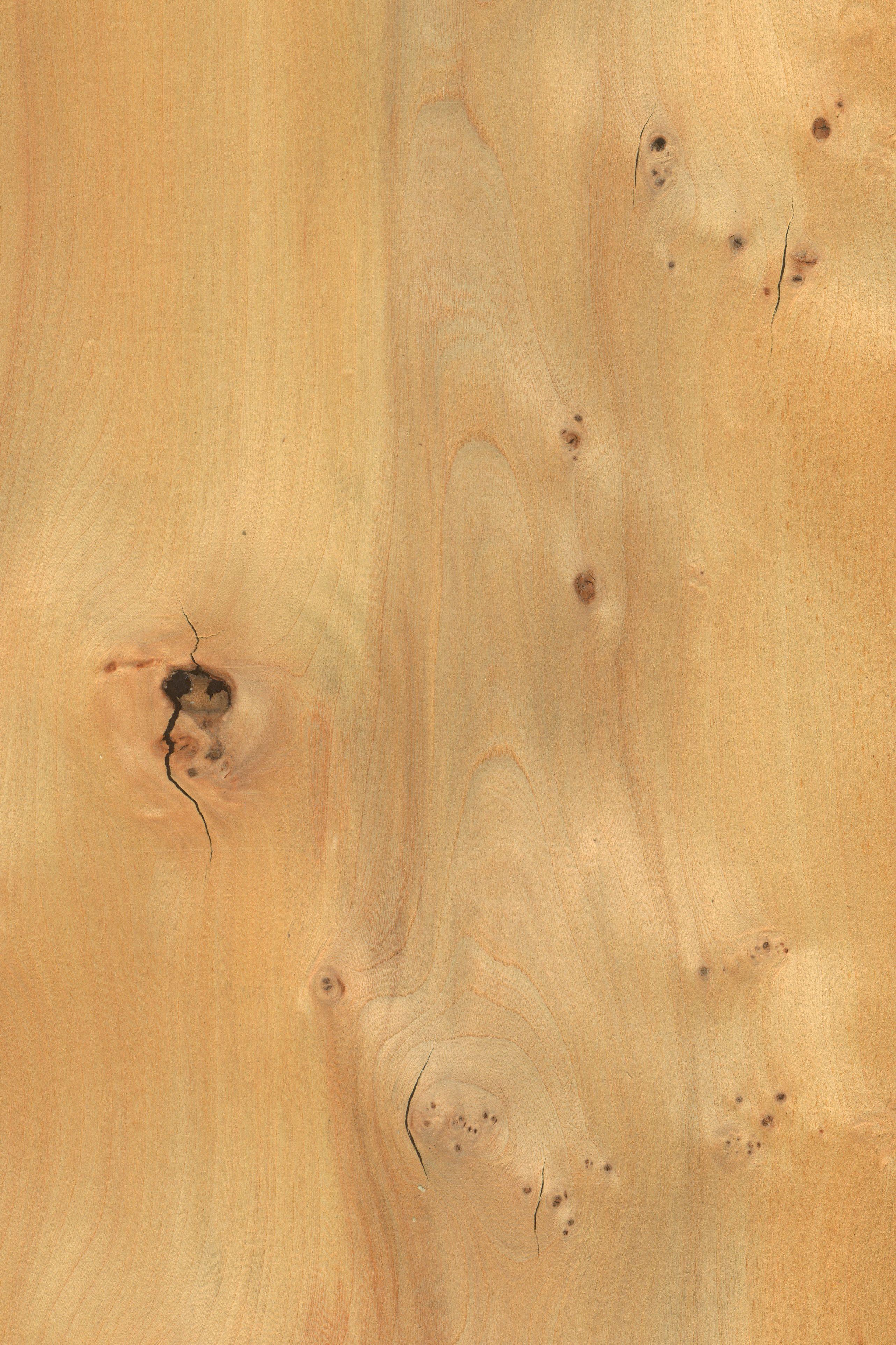 Rüster Holz rüster maser furnier holzart robinie blatt hell braun