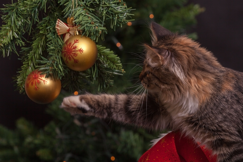 Pexelsphotoeg christmas pinterest
