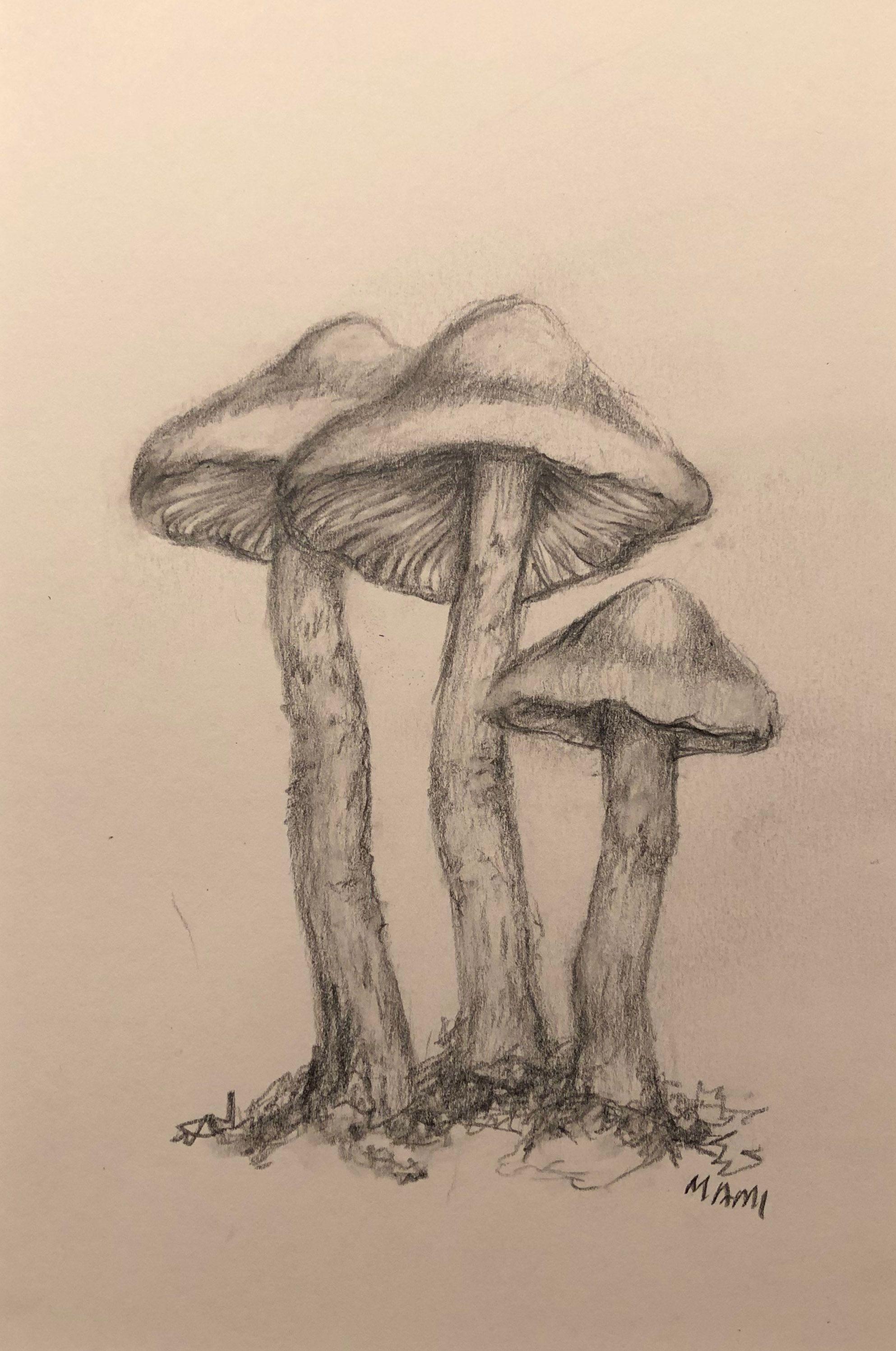 Basiadoesart mushroommaddness pencildrawings mushroom drawing the creator pencil drawings stuffed