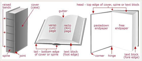 Diagram of the Different Parts of a Book | Graphic - Editorial ...