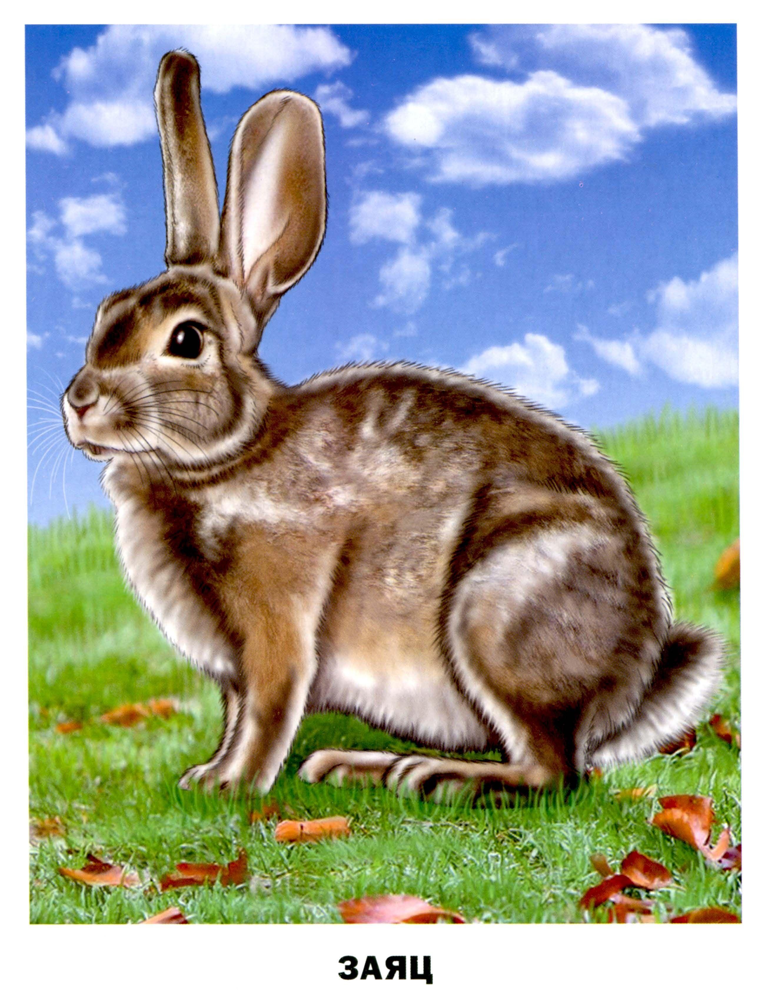 Картинки с изображением животных для детей, картинки