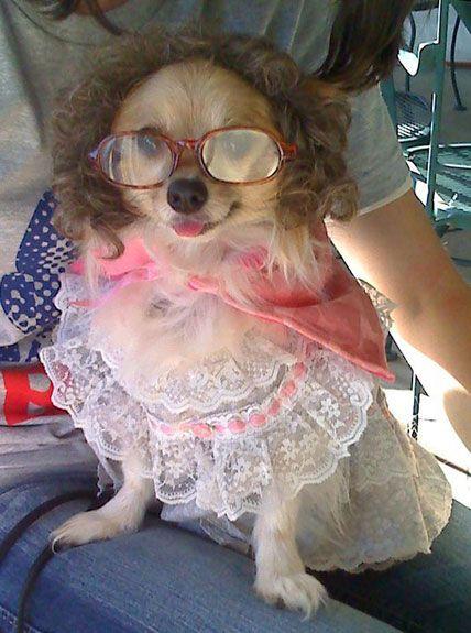 Dog Halloween Costume Contest Little Debbie Dog Fancy Dress