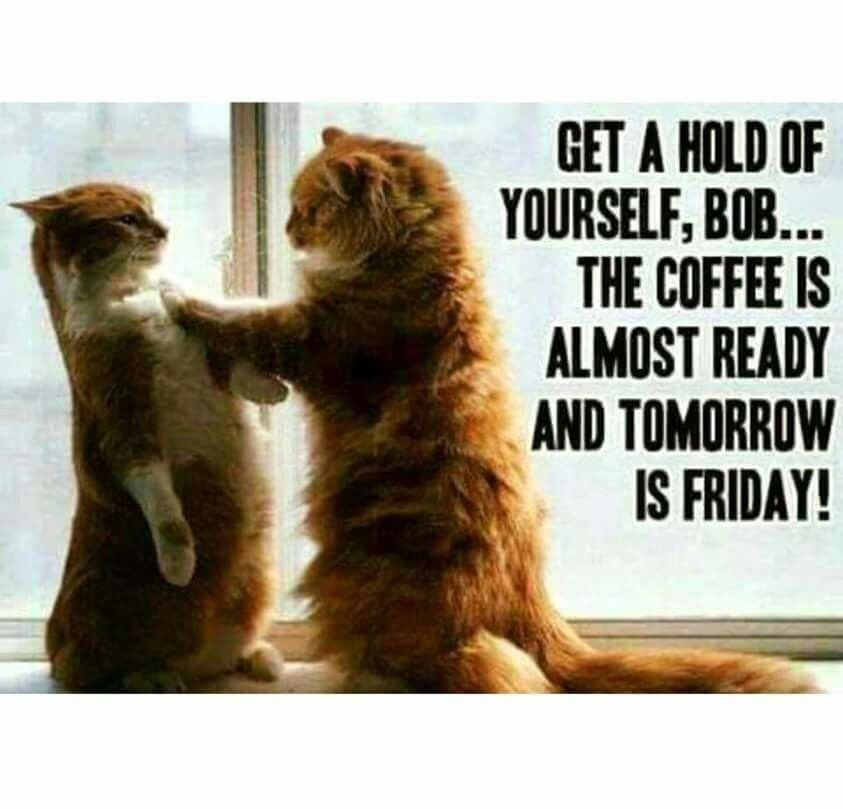 Funny Friday Coffee Meme : Get a hold of yourself bob the coffee is almost ready