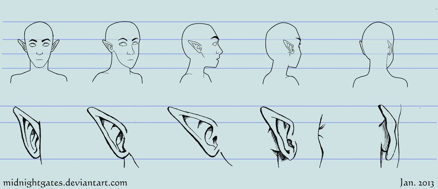 Reference Elf Ears Turn Around By Midnightgates On Deviantart Elf Ears How To Draw Ears Creature Drawings