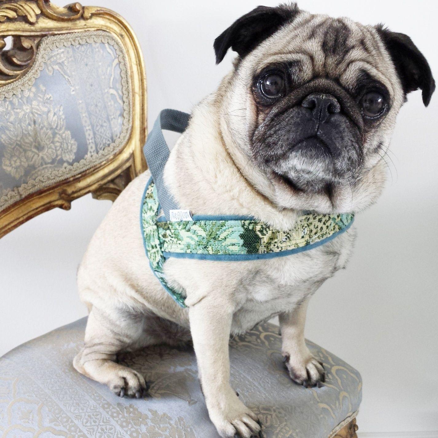 Pippa in her Jungle Dog Harness from Arnheim The Netherlands | Handmade | MissFlo | Pug