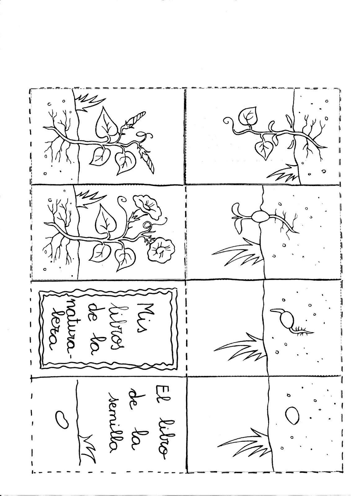 Qu puedo hacer hoy plantas actividades en el aula for Como crecen los arboles para ninos