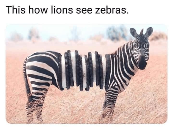 Latest Funny Things Best Of Random Memes – Part 7 Best Of Random Memes - Part 7 | Lively Pals 11