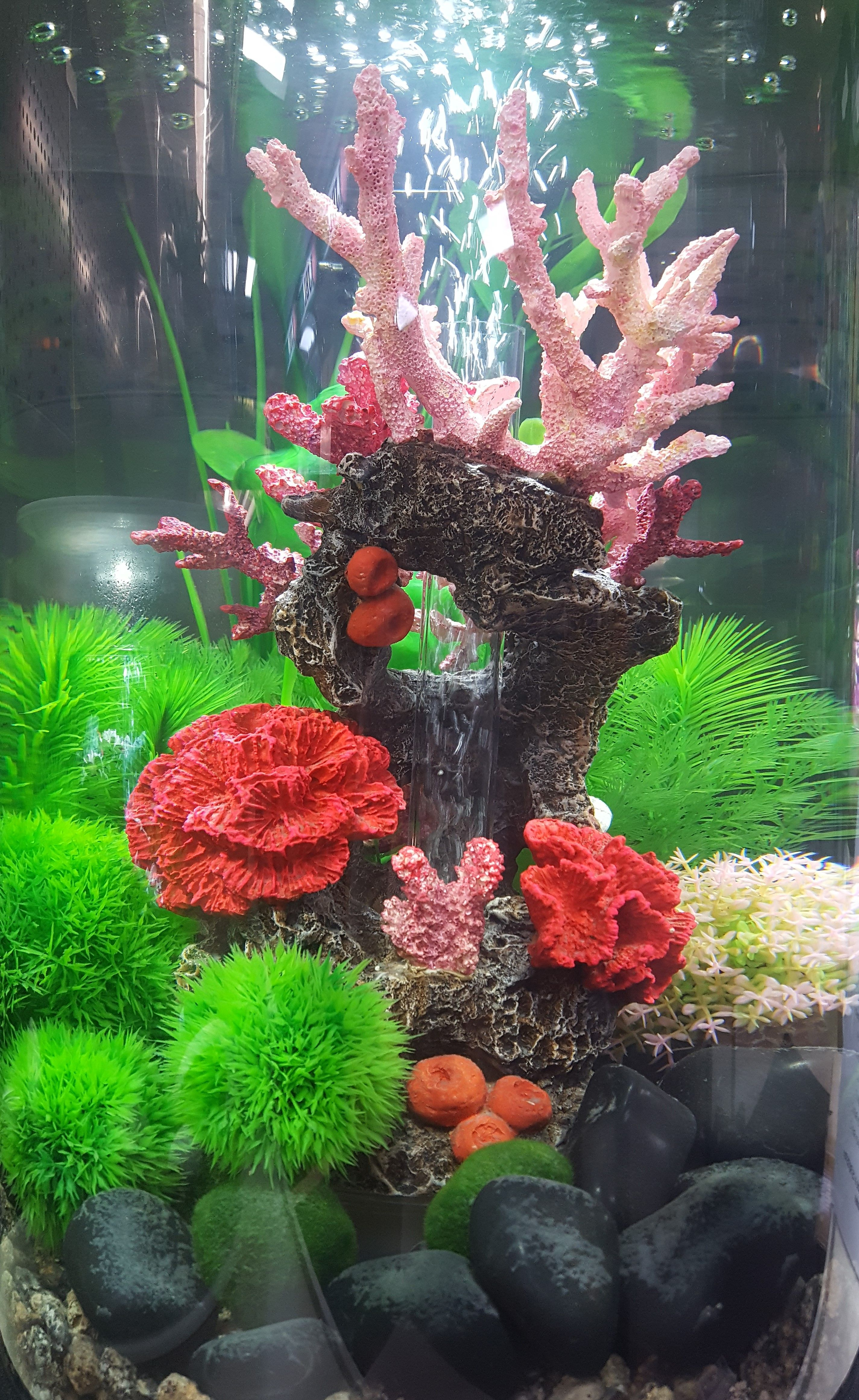biOrb Fish Tank Design Fish Tank Design Pinterest