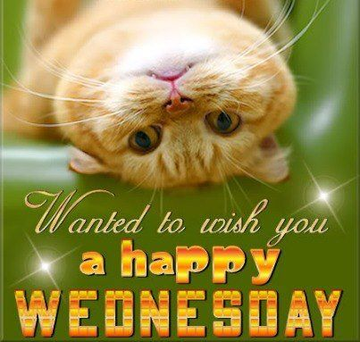 Happy Wednesday Everyone Hope You Have A Great Day Wisies
