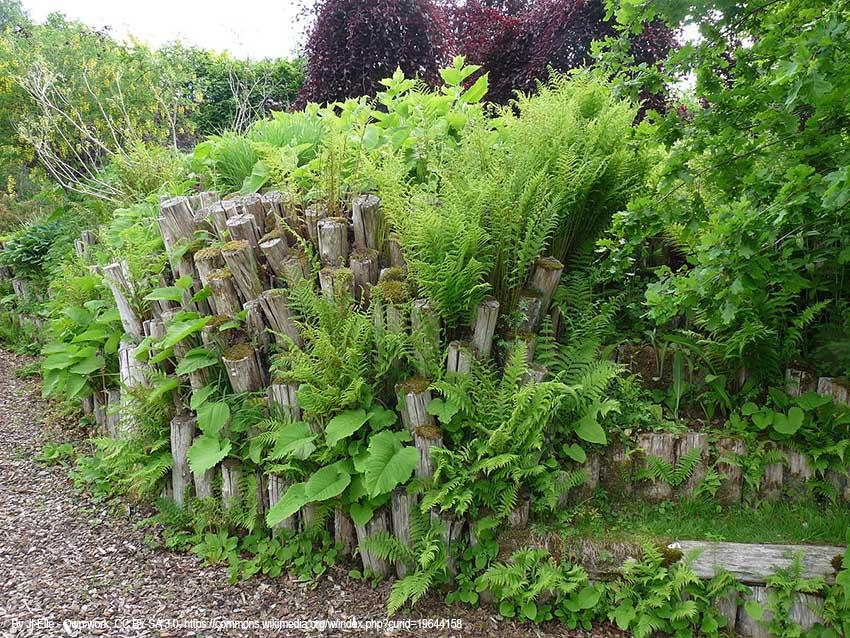 Totholzhaufen Im Garten Naturgarten Garten Garten Design