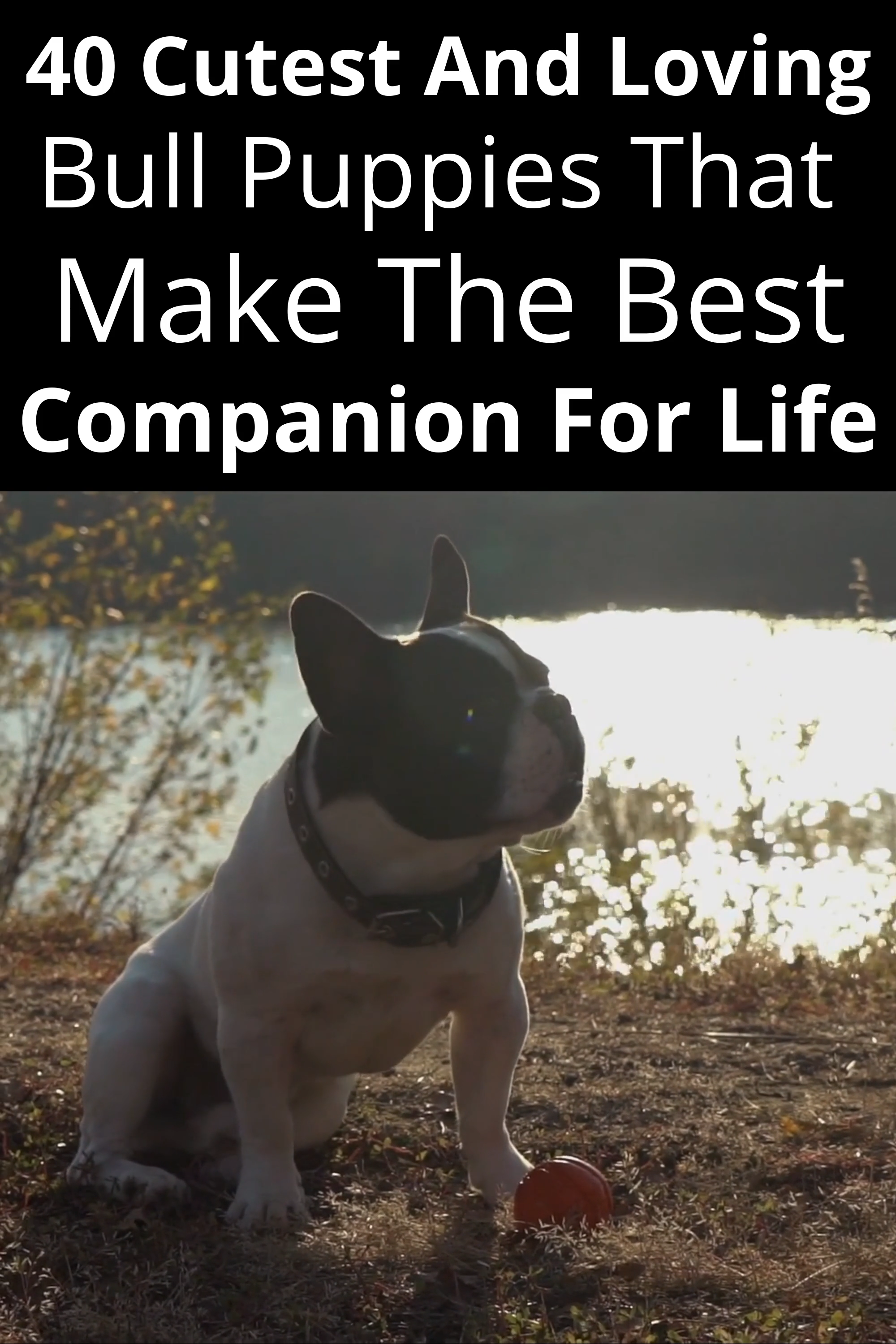 40 Cutest And Loving Bull Puppies That Make The Best Companion For Life ,  #Bull #carpettypes #Companion #Cutest #life #Loving #Puppies