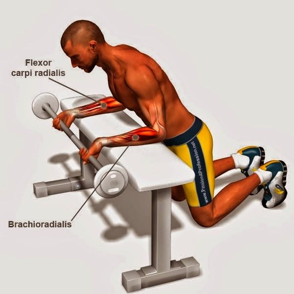 Execution Forearm Curls Proper Form