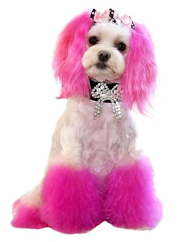 Beverly Hills Dog Show 2020.Princess Of Beverly Hills The World S Most Glamorous Dog