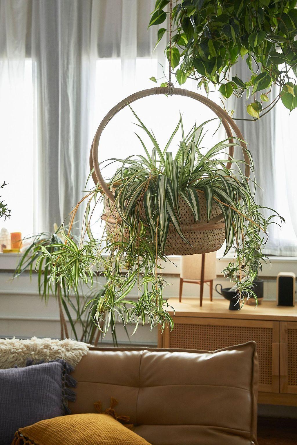 Hanging Planters Plants