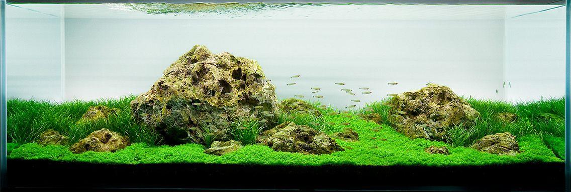 Aquarium Design Group | Aquarium design, Aquascape, Nature ...