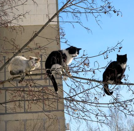 The cat tree is in full bloom now! | Bad cats, Cute cats, Funny cute cats